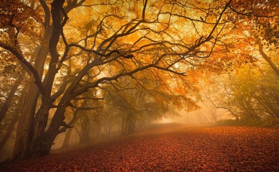 A forest in autumn is popular as stock photography