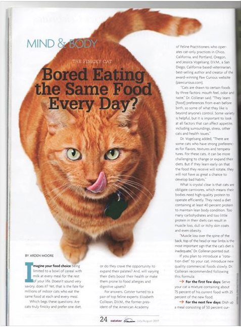stock photo of a cat being used in a magazine
