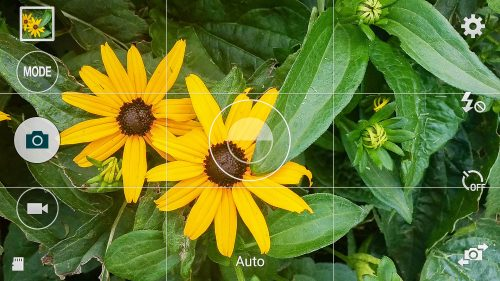 Tap your subject before taking a smart phone photo for best results
