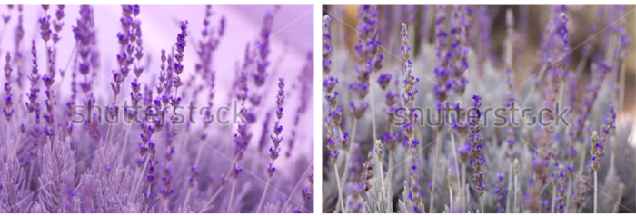 Ultra violet is officially the color of the year - here's how to work it into your photos...