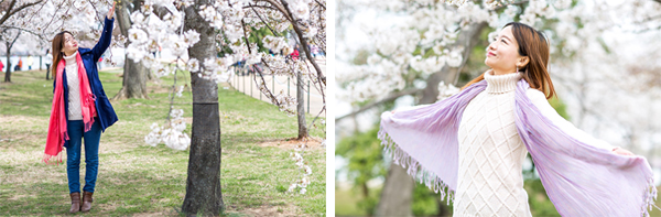 A stock photography shoot at the iconic cherry bloom in Washington D.C.