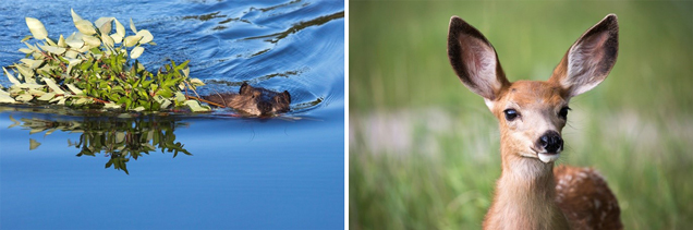 3 tips for taking wildlife photos you can sell as stock...