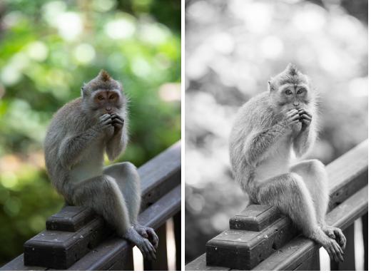 When it makes sense to make a photo black and white