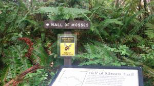 8hall of mosses trail, hoh rainforest by tamatha hazen