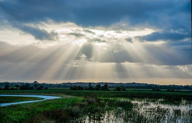 Florida sunbeams