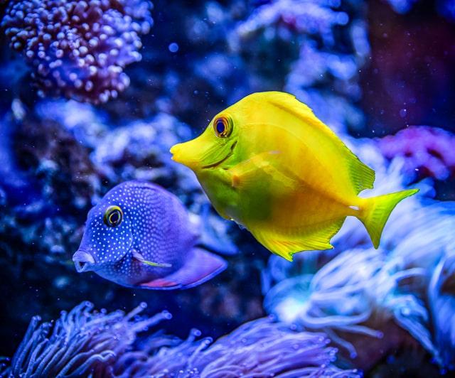 australia coral reef