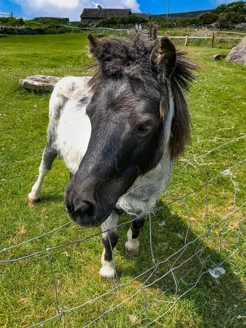 dingle farm horse
