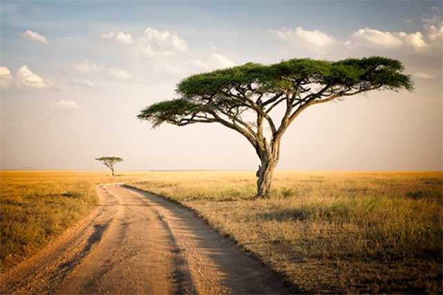1. Tanzania landscape